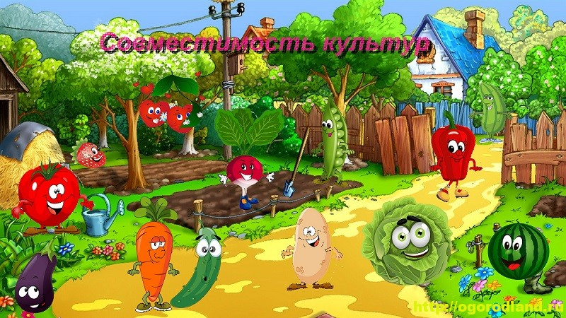«Дружат» овощи на грядках. Совместимость культур на огороде 1