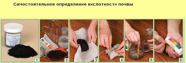 Как определть кислотность и состав почвы на участке