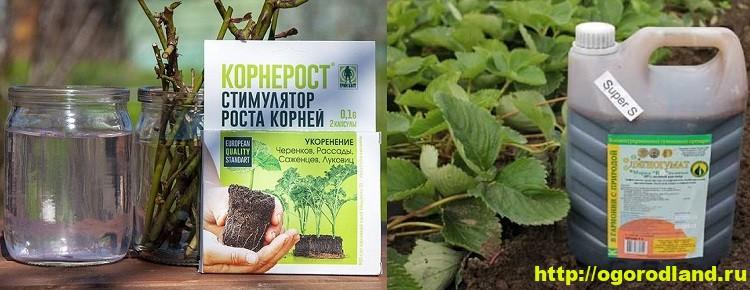 «Корнерост» и «Лигногумат». Стимуляторы роста растений
