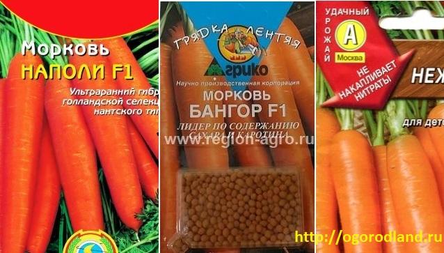 Сорта моркови Наполи F1, Бангор F1, Нежность 1
