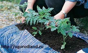 Для выращивания рассады большой полиэтиленовый пакет легко превратить в грядку.