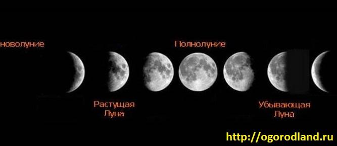 Влияние Луны на растения. Фазы Луны на 2018 год 3