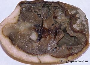 Мокрая гниль-бактериальная болезнь. Клубни загнивают,темнеют,издают неприятный запах.