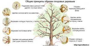 Обрезка и Формирование Деревьев