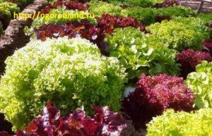 Разноцветные салаты.