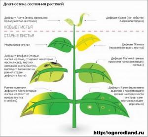 состояние растений