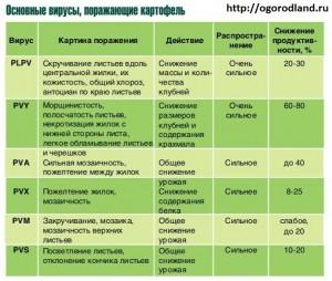 Вирусные болезни картофеля.
