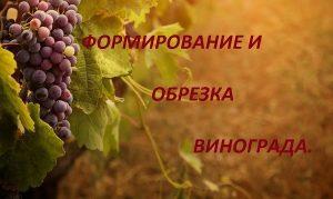 Формирование и обрезка винограда.