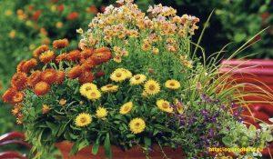 В народе говорят, что сухоцветы приносят долголетие и бессмертие.