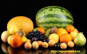 Хранение арбузов, дыни, яблок и груш