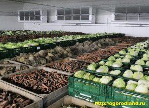 После уборки картофеля и овощей в них не прекращаются процессы жизнедеятельности и биохимические изменения, от направленности и интенсивности прохождения которых зависит лежкость продукции.
