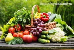 Свежий урожай на вашей кухне.