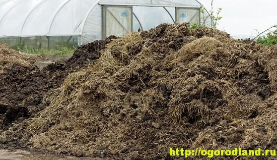 Чаще всего в качестве биотоплива для теплицы используют навоз домашних животных, древесные опилки, солому, листву, растительные остатки, бытовой мусор органического происхождения.