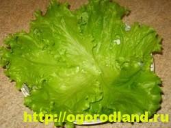 Листьями салата выстелите дно салатника