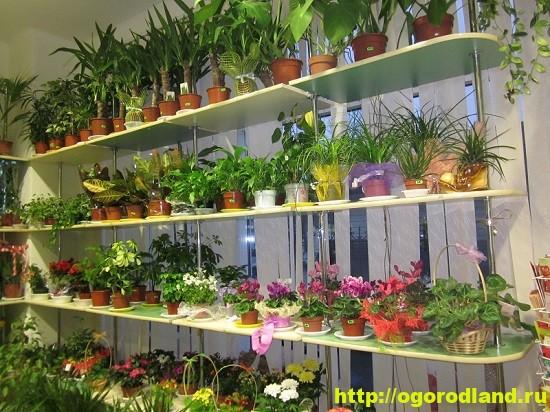 Правила успешной покупки растения.