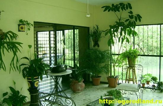 Размещение растений в помещении