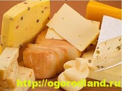 Твердый сыр для тарталеток