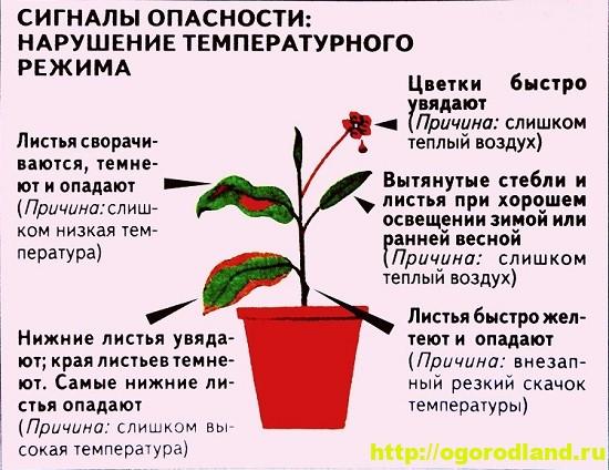 Признаки нарушения температурного режима комнатных растений