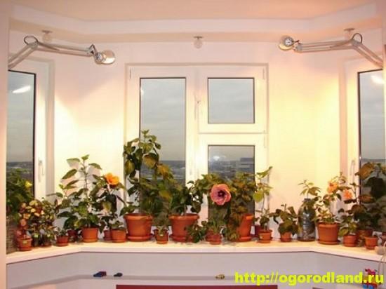 В восточных и западных комнатах нежелательно выращивать светолюбивые растения без дополнительной искусственной подсветки