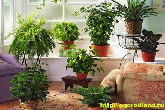В целом теплые южные комнаты идеальны для выращивания комнатных растений с не слишком выраженной физиологической сезонностью.