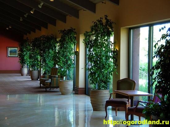 Растения для фойе официальных учреждений