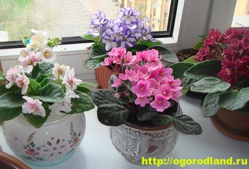 Растений, для которых именно северные комнаты являются лучшими из лучших, совсем немного