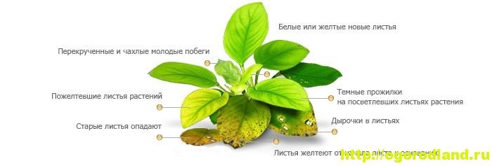Симптомы заболеваний у растения