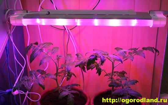 Из дополнительных источников света особенно желательны фитолампы, так как они положительно влияют на микроклимат.