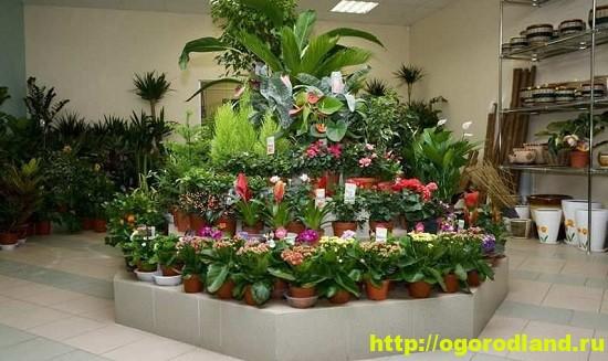 Покупая растения па базаре у незнакомых продавцов, вы рискуете не только получить нездоровый экземпляр.