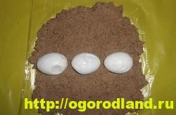Выложите яйца на печеночный фарш
