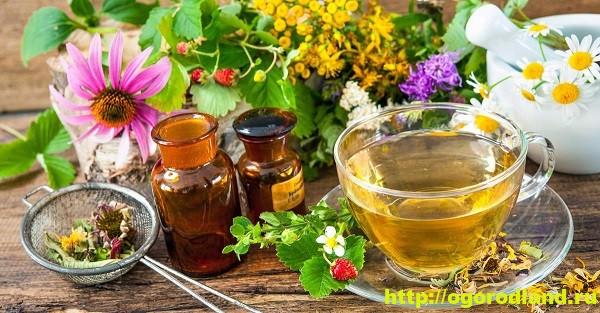 Профилактика и лечение простуды и гриппа народными средствами