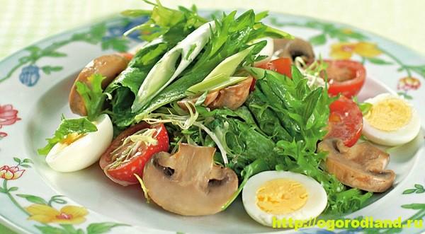 Салат из шампиньонов. Три рецепта приготовления грибных салатов