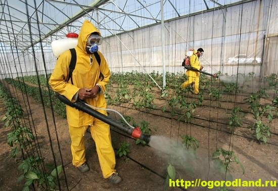 Применять химические средства защиты растений на садовых участках нужно очень умело и осторожно.