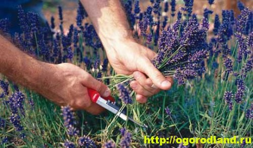 Как собирать, хранить лекарственные растения.