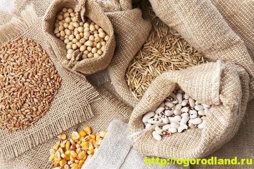 Самый простой способ хранения семян — в комнате или кладовой, в бумажных пакетах или матерчатых мешочках.