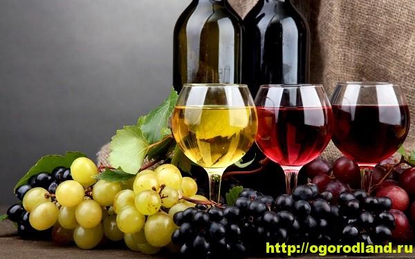 Вино — полезный напиток для сердца. 1