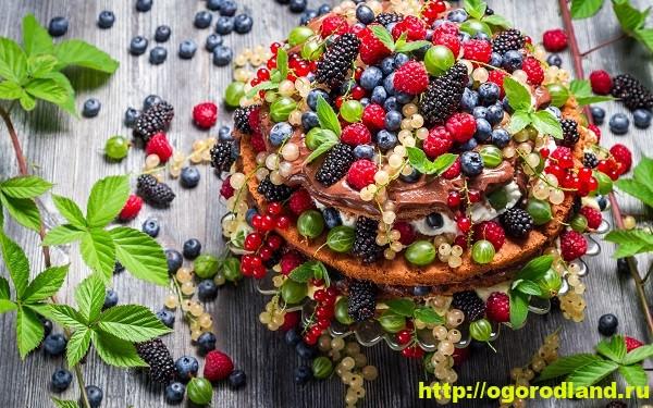Полезные и лечебные свойства ягоды 3