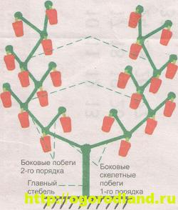 Советы по выращиванию томатов, огурцов и перцев в теплице