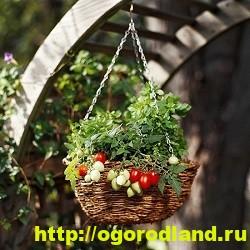 Декоративный огород. Как сделать вертикальные грядки 8