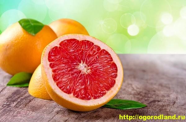 Грейпфрут. Полезные свойства