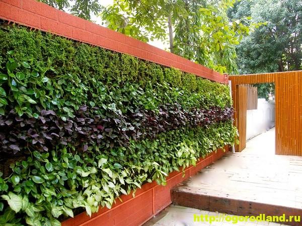 Декоративный огород. Как сделать вертикальные грядки 1