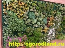 Вертикальный огород