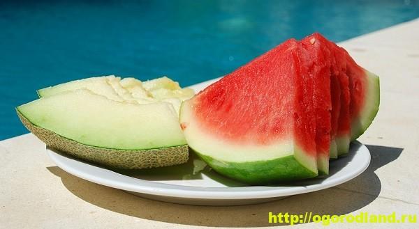 Полезные свойства дыни и арбуза
