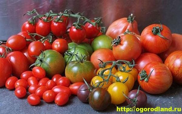 Обзор сортов помидоров (томатов) для открытого грунта