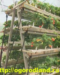 Декоративный огород. Как сделать вертикальные грядки 2