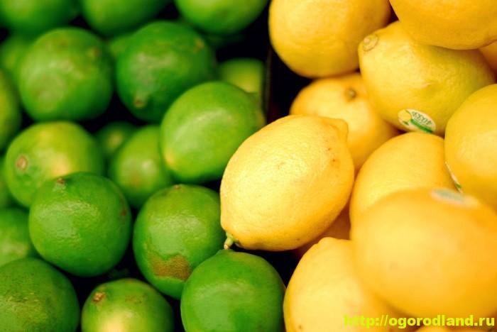 Лимон и лайм. Полезные свойства