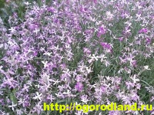 Однолетние цветы, рекомендованные к посадке на участке 3