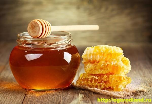 Мед. Полезные и лечебные свойства