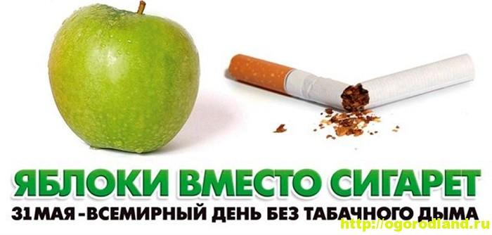Овощи и фрукты в жизни курильщика 1