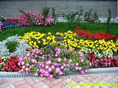 Однолетние цветы, рекомендованные к посадке на участке 1